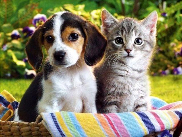 Un estudio confirma quién es más listo: el perro o el gato